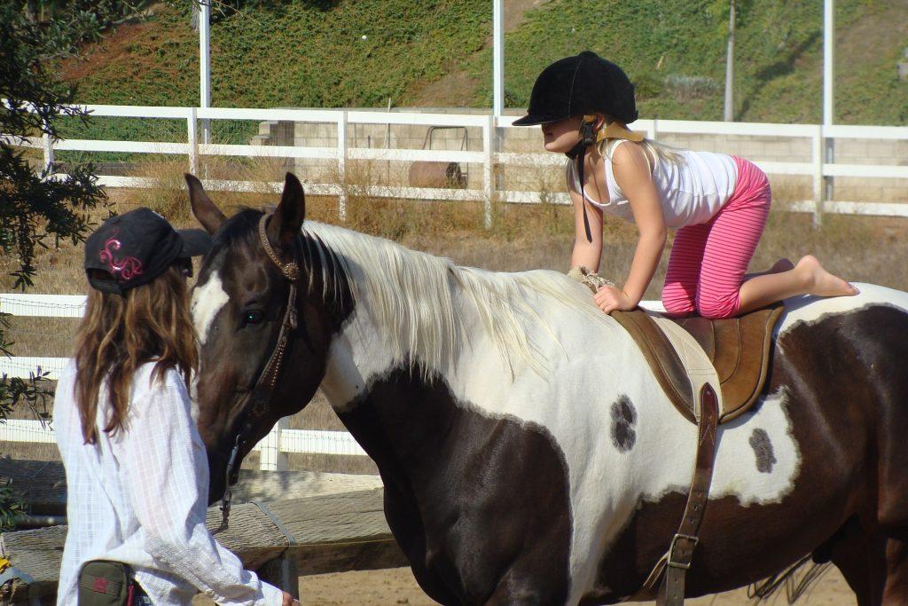 Kursy nauki jazdy konnej Łódź
